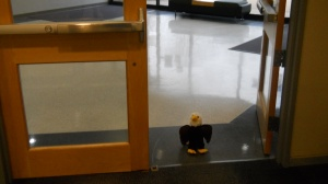 Stuffed eagle walking into front door